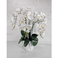 ORCHID LOVE DIY PCK FLORALS ONLY