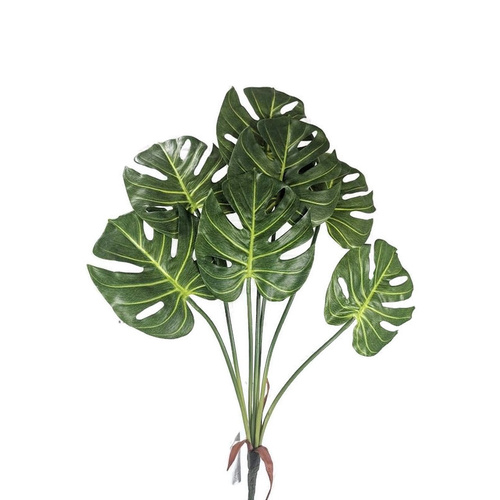Monstera Leaves Bunch