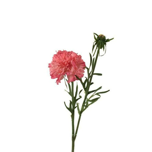 CARNATION SPRAY EE0025-PNK