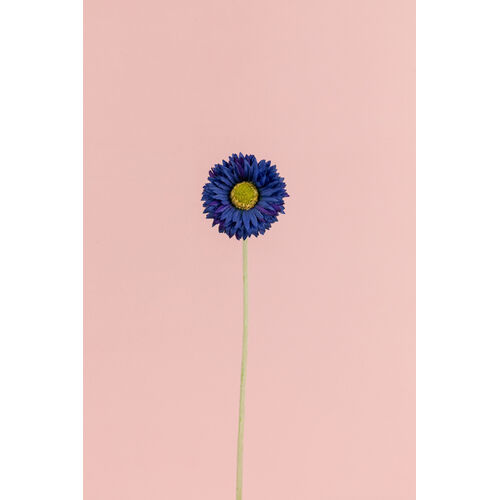 Mini Blue Daisy EE0034