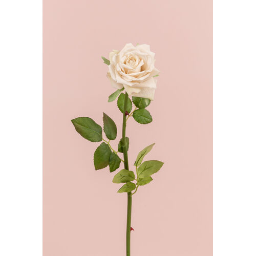 Single Rose EE0044-CREAM/WHITE