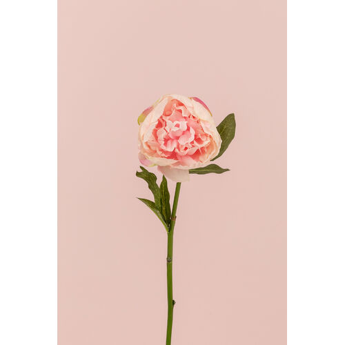 Single Peony Stem JI2608-PNK