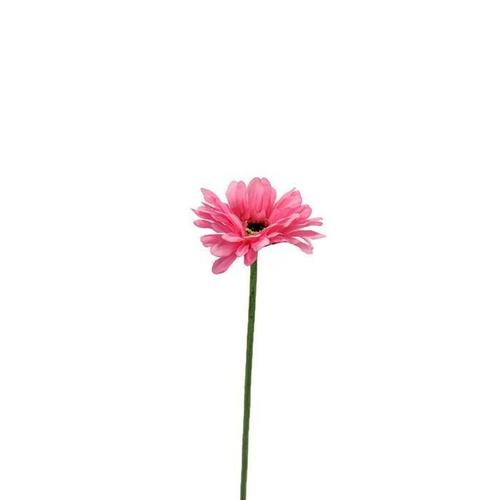 Gerbera single stem LB033-HTPNK