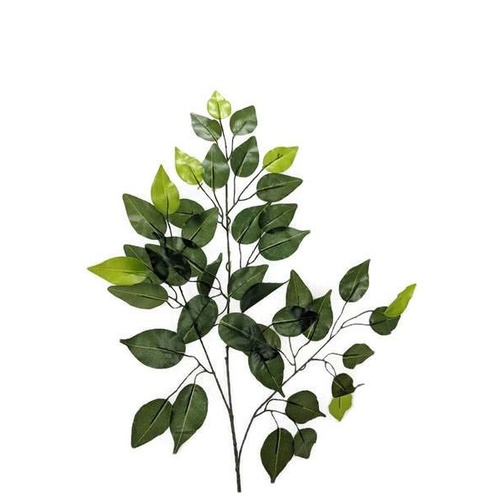 Ficus leaves spray LB039