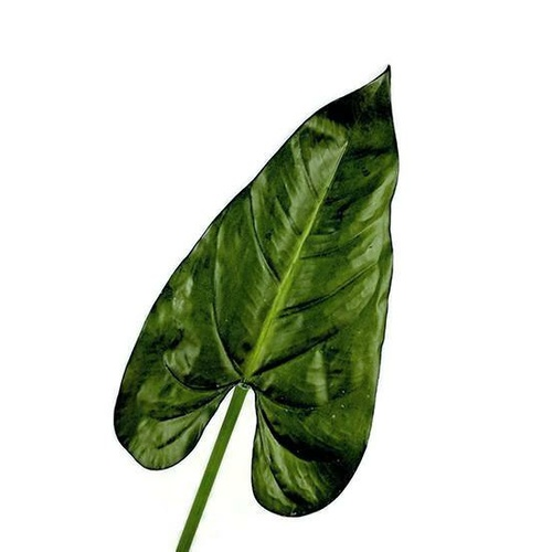 Real Touch Anthurium Leaf S3691