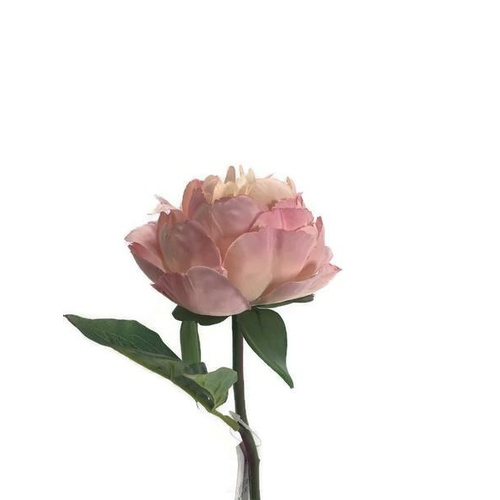 Single Peony Stem S5841-DUSPNK