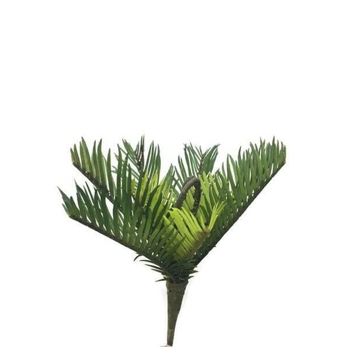 Cycas Fern SM016-GREEN