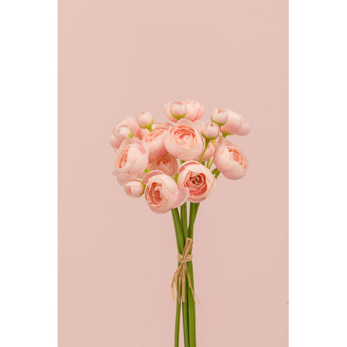 Mini Ranunculus Bunch SM056-LPNK